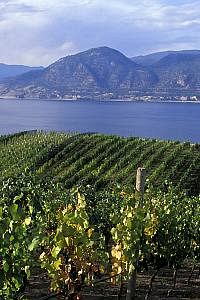 Okanagan Wine Tour