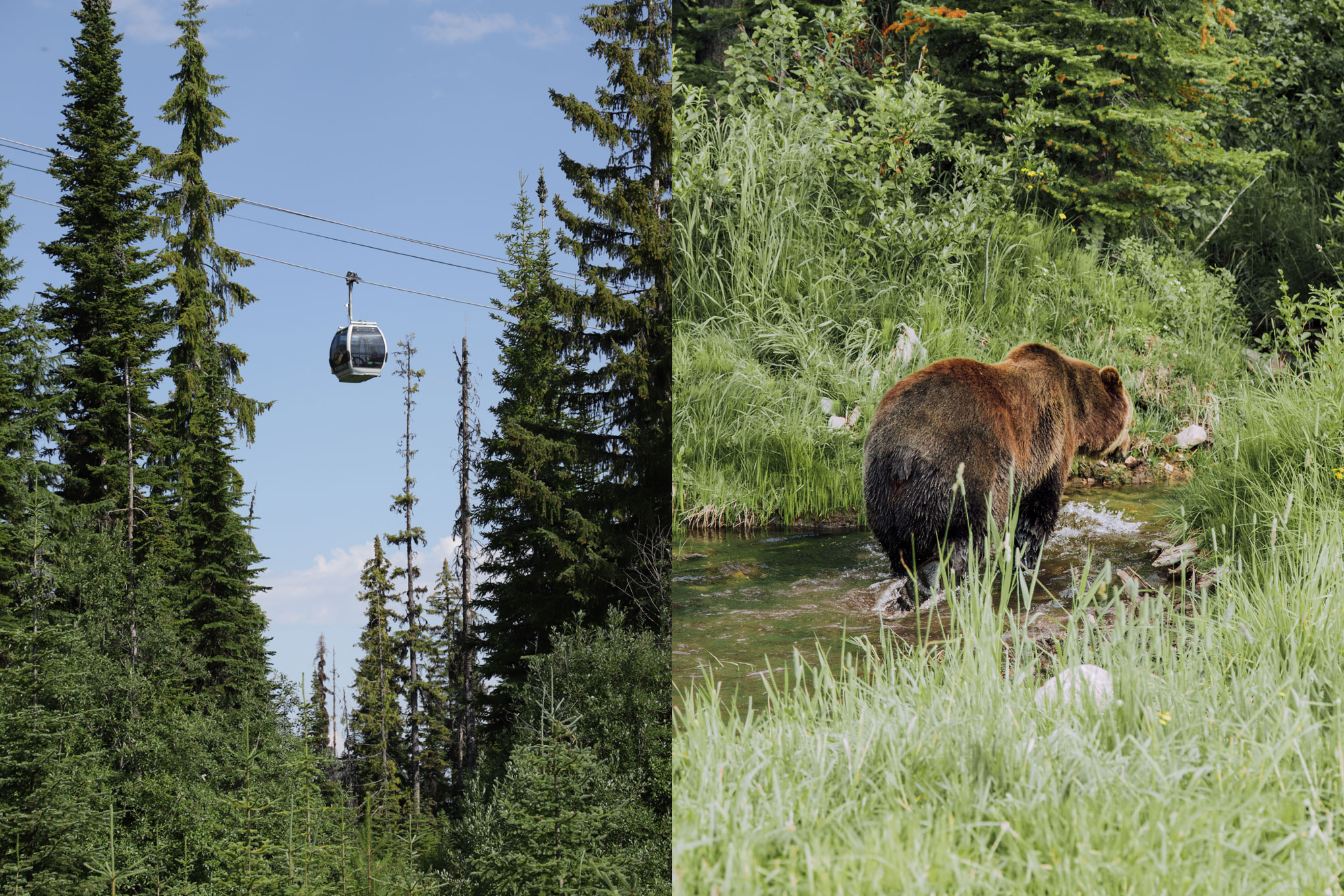 Left: Gondola ride up Kicking Horse Mountain. Right: Boo the Grizzly Bear!