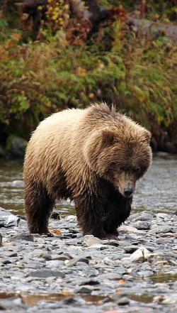 Grizzly Bear Refuge Package